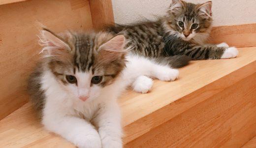 子猫を迎える当日 家に着いてからの様子について